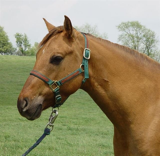 B-K Quarter Horses